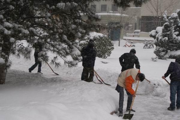 院学生积极行动扫雪除冰图片